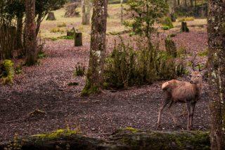 Vídeo viral: Pitón salta del agua a gran velocidad de relámpago y ataca a un ciervo