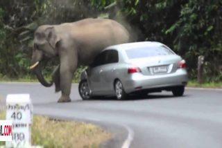 Vídeo Viral: el elefante furioso aplasta un coche con los turistas dentro