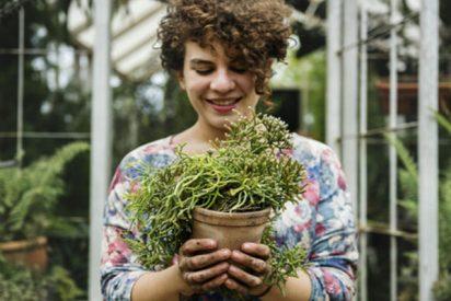 ¿Sabías que las plantas con maceta que tienes en casa no purifican el aire?