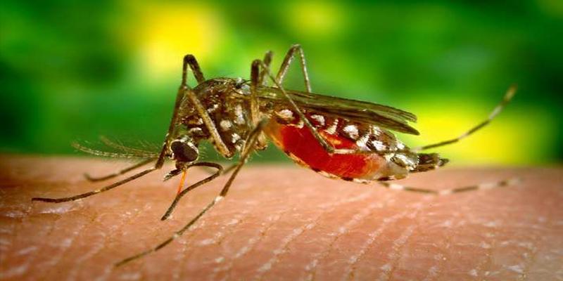 ¿Sabías que la tela de grafeno evita que los mosquitos piquen?