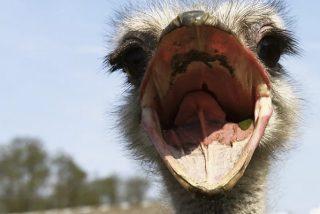Vídeo viral: Un avestruz corre por una autopista para sorpresa de los conductores