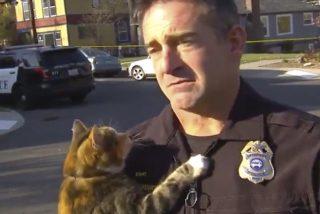 Vídeo viral: Este gato 'asalta' a un oficial de policía e interrumpe su entrevista con la prensa