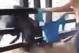 Vídeo viral: Este tipo se pasa de listo intentando torear a una vaca y recibe su merecido…