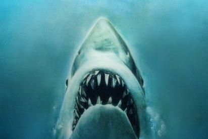 Covid-19: medio millón de tiburones, en peligro por la producción de vacunas