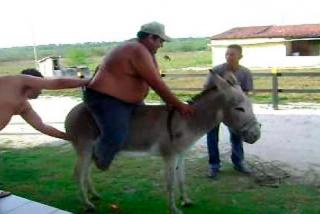 Vídeo viral: Así obligan a burros a transportar turistas gordos cuesta arriba en Grecia