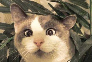 Vídeo viral: Este gato pilla al vuelo a un murciélago
