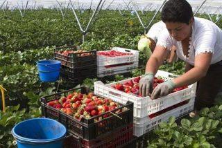 Huelva: un paro de 9.000 personas en el campo, pero sin nadie dispuesto a recoger fresas