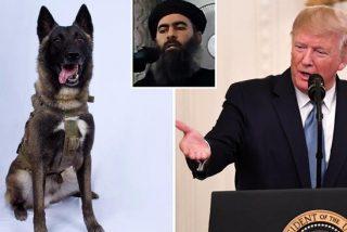Trump condecora a Conan en la Casa Blanca, el perro que participó en la operación contra el líder del ISIS