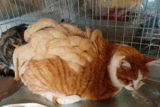 Este gato francés se quita un kilo de rastas y empieza una nueva vida