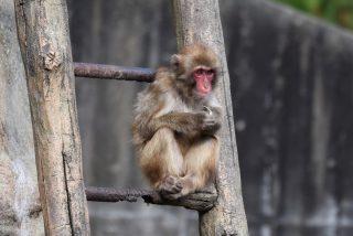 Preocupación después de que un investigador se contagiara con un raro virus mortal que afecta al cerebro mientras realizaba experimentos en monos