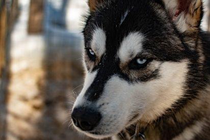Este perro enciende accidentalmente el microondas y por poco quema la casa de su dueña