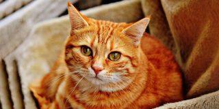 Este gato 'habla' con un perfecto acento sureño de EE.UU. y los usuarios no pueden parar de verlo