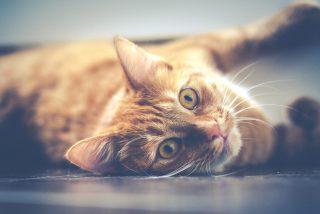 Rescatan a este gato abandonado y emparedado por sus antiguos vecinos