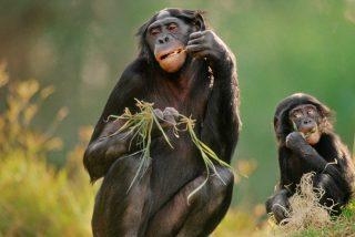 ¿Sabías que el alcohol salvó a nuestros ancestros de la extinción?