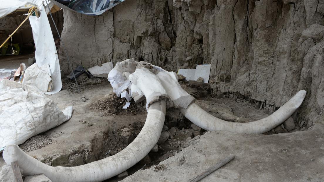 Descubren dos esqueletos de mamut durante la construcción de un aeropuerto