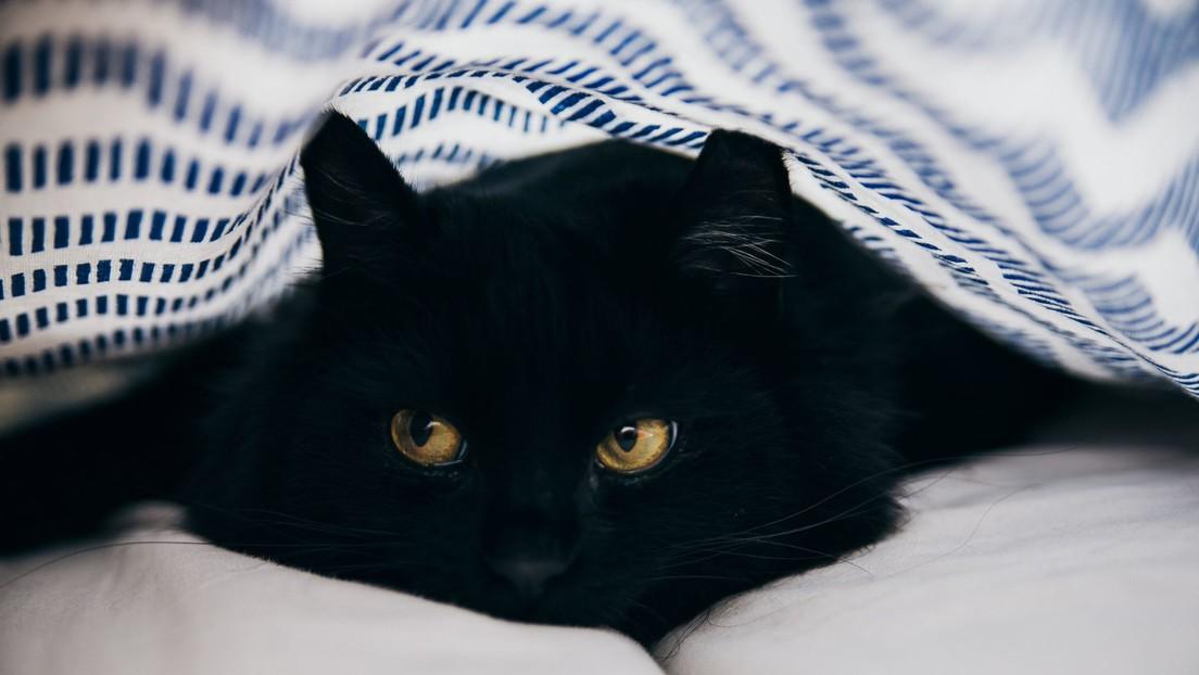 ¡Un milagro de Navidad!: Esta gatita 'resucita' con reanimación cardiopulmonar tras permanecer 20 minutos en una lavadora en marcha