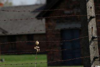 Dos prisioneros y amantes en Auschwitz se reencuentran 72 años después y él tenía una sola pregunta