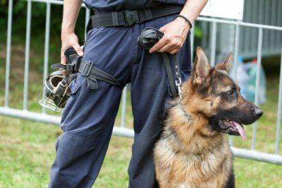 Montan una exhibición canina en un instituto y los perros-policía descubren droga en la aulas y pillan a tres alumnos-camello