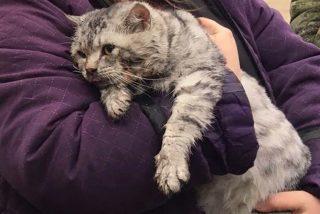 Así 'resucitan' los bomberos a este gato rescatado de una casa incendiada