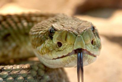 Una mujer cree haber encontrado una inofensiva serpiente en el baño de su casa y resulta ser una de las más venenosas del mundo