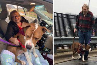 Unos animalistas devuelven a su hogar a este perro robado y trasladado a más de 3.000 kilómetros en EE.UU.