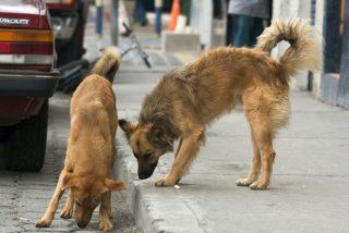 Estos 2 perros salvan a una mujer de ser asaltada por un delincuente armado