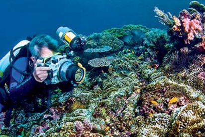 ¿Sabías que poner altavoces al lado de los arrecifes de coral muertos ayuda a resucitarlos?