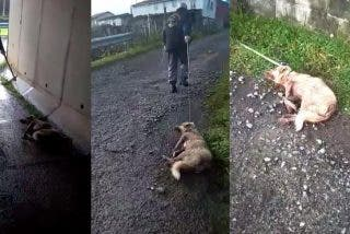 """Un tipo dispara, golpea y arrastra a su perra: """"Disparo a quien me sale de los cojones"""""""