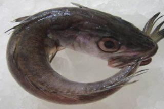 Chiste: el de las pescadillas y la mujer muy fea