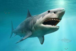 Este tiburón salta a las rocas de una playa para zamparse unas sardinitas frescas, frescas