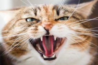 Muere de rabia en Bilbao el marroquí al que mordió un gato infectado cuando estaba de vacaciones en su país