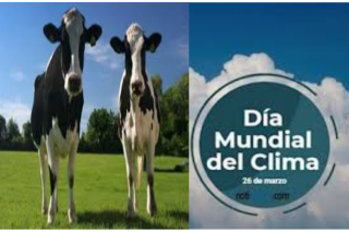 """Manuel del Rosal: """"Una más sobre el cambio climático: Las vacas son culpables"""""""