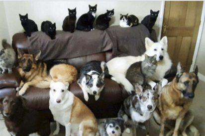 Una mujer logra 'sincronizar y hacer posar' en una foto perfecta a sus 17 mascotas
