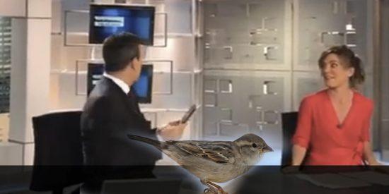 Un gorrión juguetón se cuela en el plató durante un informativo en directo en Telecinco
