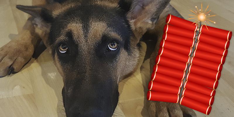 La primera ciudad del mundo que decide dejar de vender petardos en Navidad para proteger a sus mascotas