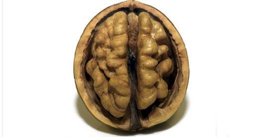 Los 10 alimentos que mantendrán tu cerebro en forma