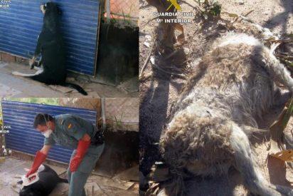 La Guardia Civil detiene a un hombre de 51 años en Murcia por ahorcar y envenenar a perros