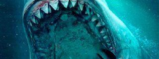 ¡Impresionante!: Así lucha este tiburón blanco por devorar a un pez gigante a pocos metros de una embarcación