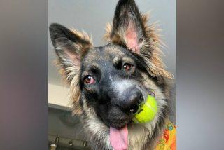 'Brodi, el perro de la cara torcida, se convierte en una estrella de Instagram