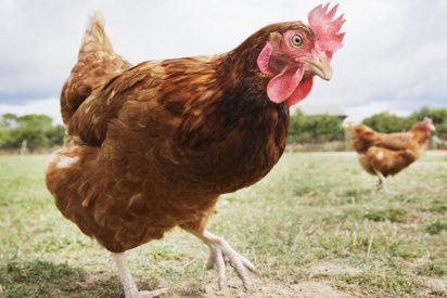 Chistes: el del apagón y el profesor de las gallinas