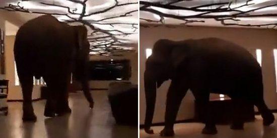 Sri Lanka: Un elefante se 'hospeda' en un hotel cinco estrellas
