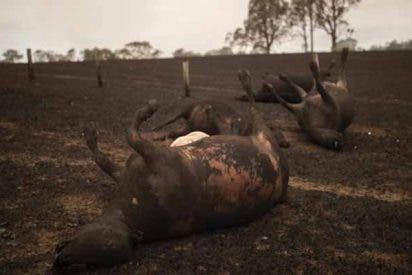 Incendios en Australia: 26 personas fallecidas y 1000 millones de animales muertos