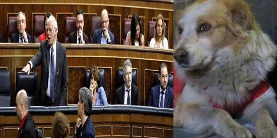 Estudio: Un perro callejero hubiese defendido mejor a Borrell que Pedro Sánchez, cuando un separatista lo escupió