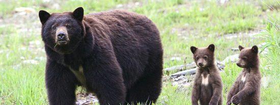 Chiste: el del cura, el pastor protestante, el rabino y el oso