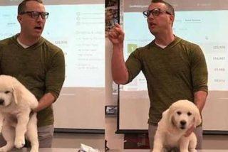 """La amenaza de un profesor 'chiflado' para motivar a su alumnos: """"Si perdéis mato al perro"""""""