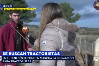 'Tractoria' vuelve a la Edad Media: abandonan los tractores por el arado a caballo con cuerda al cuello