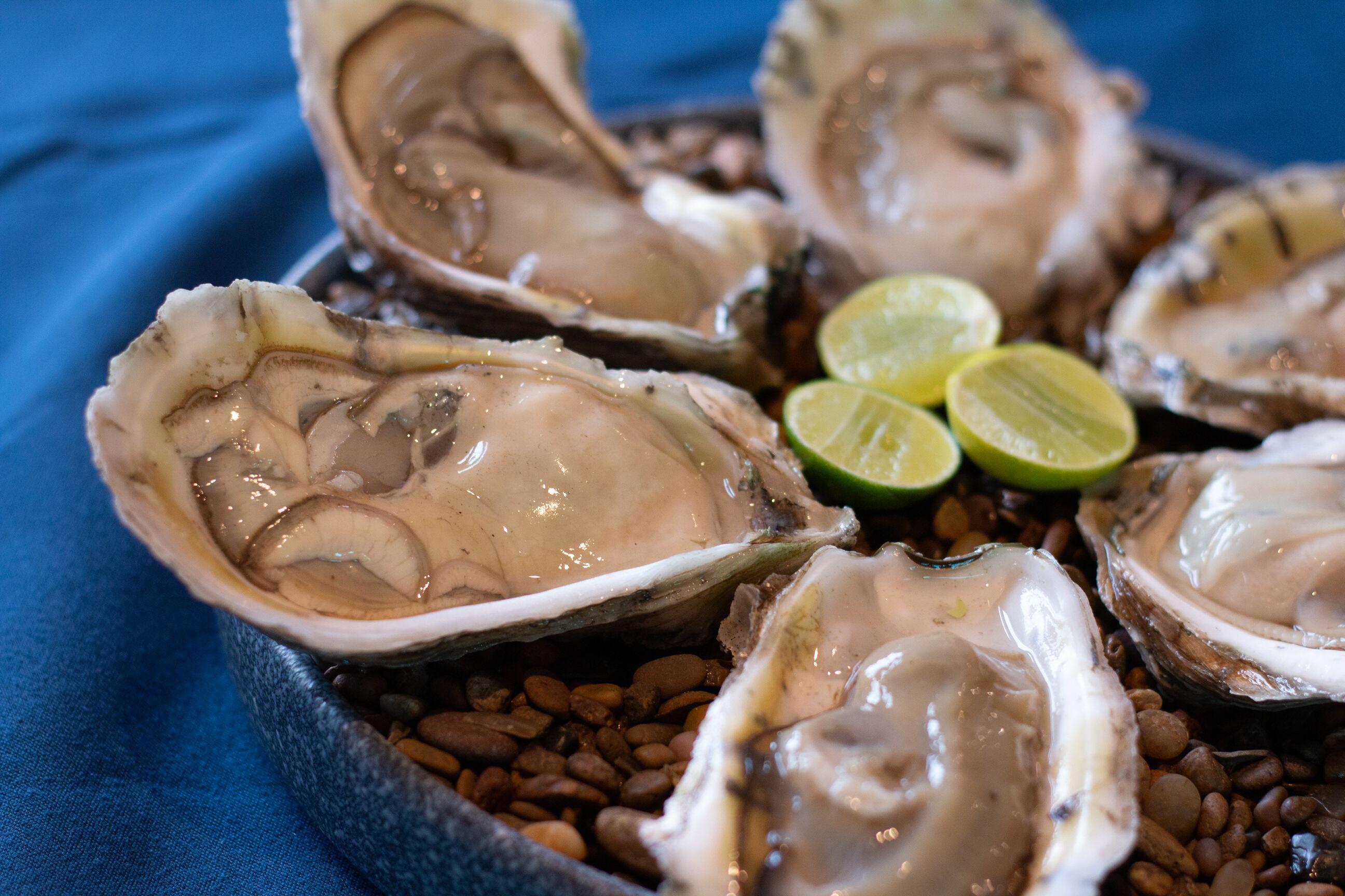 Tamaulipas gastronomia Mexico