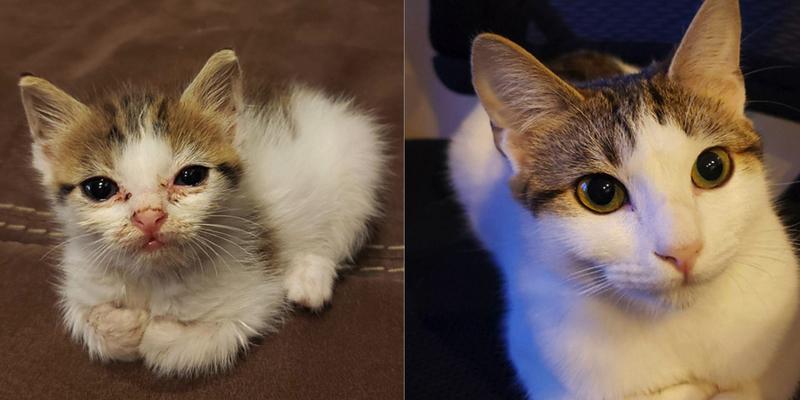 Gatos: Un hombre muestra el increíble antes y después de su gata tras ser rescatada de la vida callejera