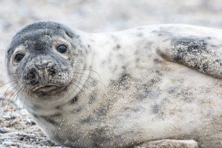 El desesperado rescate de unas focas a una compañera atrapada en un drenaje ante la atónita mirada de unos niños