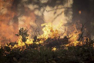 Incendios en Australia: por qué son tan feroces, matan tanta gente y parecen imposibles de parar